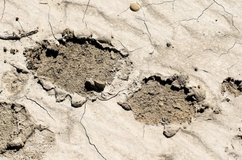 footprint-in-mud-1110405_960_720